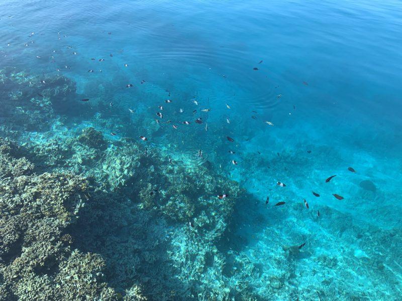 水面から見える魚たち