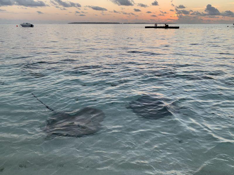 Sunset with stingrays
